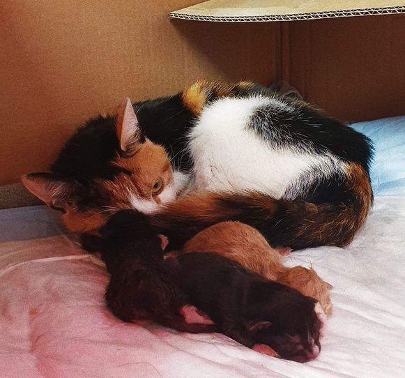 De moederpoes en kittens, nadat ze opnieuw verenigd werden.