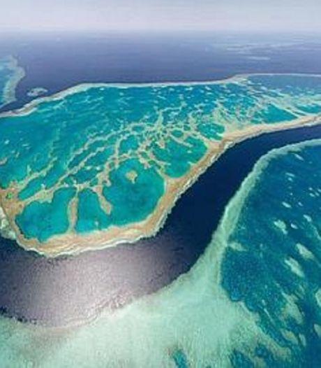 """Grande Barrière de corail """"en danger"""" pour l'Unesco, l'Australie prête à contester"""
