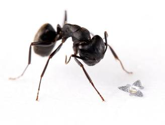 Deze microchip is het kleinste vliegende object dat ooit door de mens is gemaakt