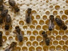 Dood van 1,8 miljoen bijen levert taakstraf op voor plantenkweker uit Molenschot