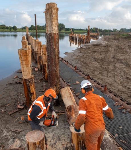 Experiment: bomen in de IJssel moeten onderhoud rivier betaalbaar maken
