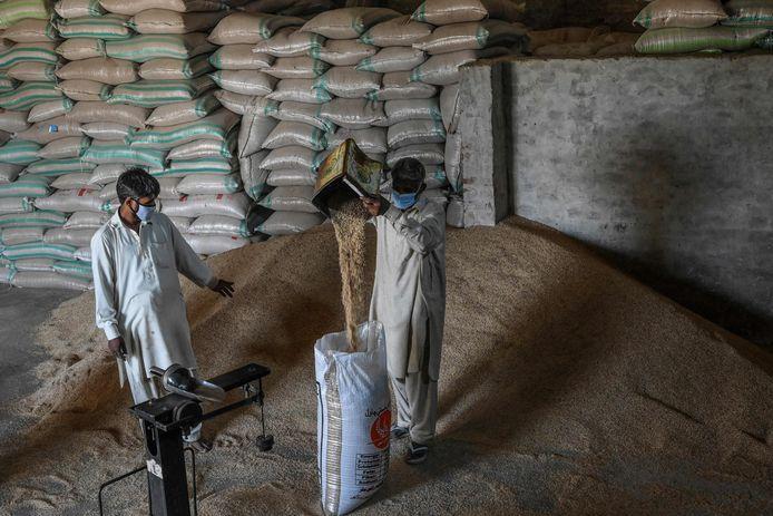Pakistaanse producent van basmati-rijst in de buurt van Lahore.