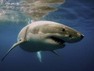 Vrouw (39) doodgebeten door haai bij Caribisch eiland Sint-Maarten
