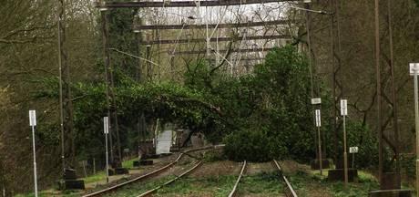 Omgevallen eik blokkeert spoor tussen Arnhem en Dieren