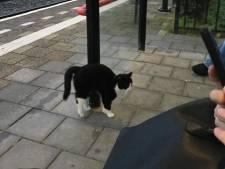 Geliefde 'stationskat' Sammie heeft even huisarrest na hachelijk treinavontuur
