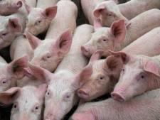Actiegroep zoekt laatste strohalm in strijd tegen uitbreiding varkensbedrijf