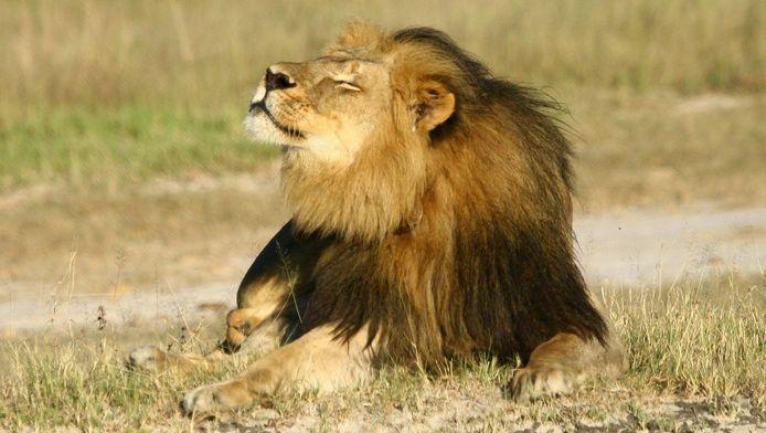 De leeuw Cecil