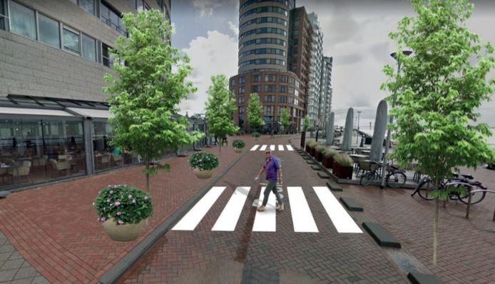 Zebra's op Boulevard Evertsen.