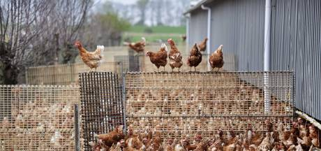 Plusieurs cas de grippe aviaire dans un élevage à Menin