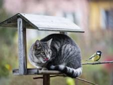 Katten verplicht naar binnen? 'Je straft dieren voor wat wij veroorzaken'