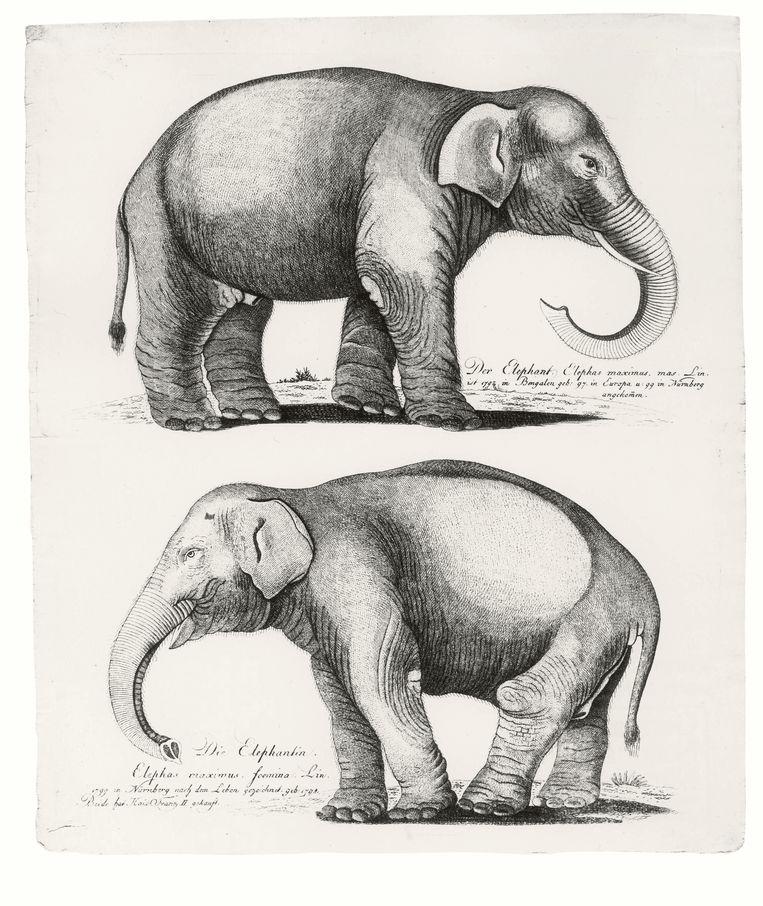 Een olifantenpaar van Antonio Alpi. Beeld