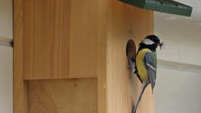 Knutsel voederhuisje voor tuinvogels met 'G o e d G e m u ( t ) s t'.