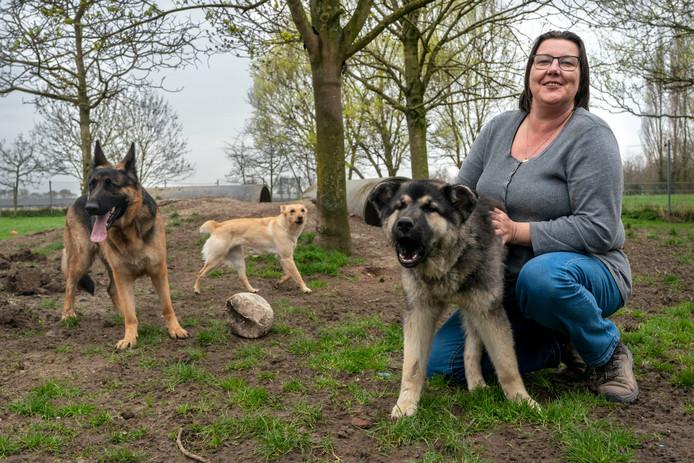 Beheerder Hetti Bouman van Dierenopvangtehuis Bommelerwaard met een paar  asielhonden.