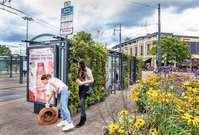 Groen in de Arnhemse binnenstad.  Beeld Raymond Rutting / de Volkskrant