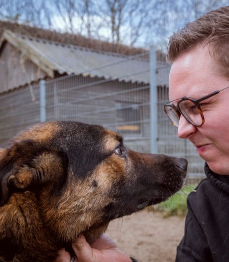 Baasje overlijdt, asiel in Zwolle vangt haar 14 honden op: 'Wie wil zo'n lieve hond nou niet?'