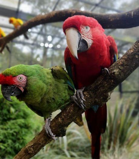 Papegaaien Avifauna die vermist waren, krijgen huisarrest