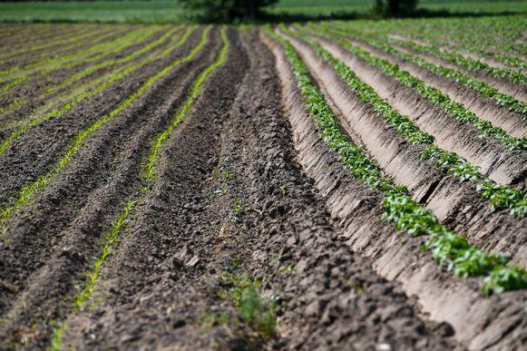 Landbouwers mogen geen water meer oppompen uit verschillende rivieren in Vlaams-Brabant.