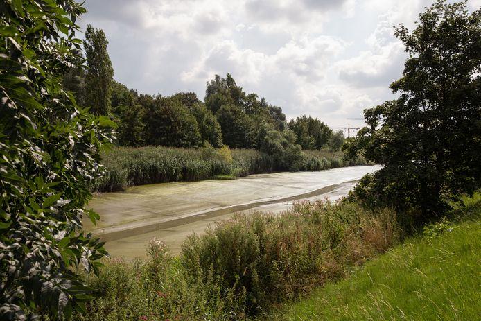 De Schelde langs de Nijverheidskaai in Gentbrugge. Veel modder voor de knijten, geen water.