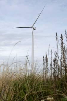 Wespendief houdt bouw van windparken Harderwijk en Hattemerbroek niet tegen, initiatiefnemers windmolens Ermelo en Putten moeten eerst drie jaar vogels tellen