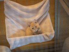 Poezenboot wil stuk grond om verwilderde katten op te vangen