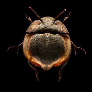 fotoreeks over Deze microfoto's van insecten zijn voor het eerst te zien in de Benelux