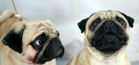 Meer gemeenten schaffen hondenbelasting af