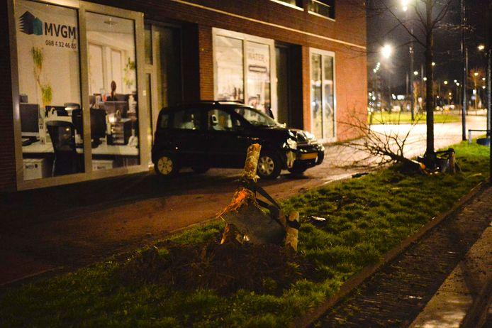 De auto reed een boom uit de grond.