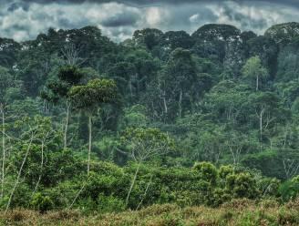Stad ondersteunt project om bomen aan te planten in het Amazonewoud