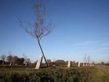 Witte Lint maakt plaats voor Groene Kralensnoer
