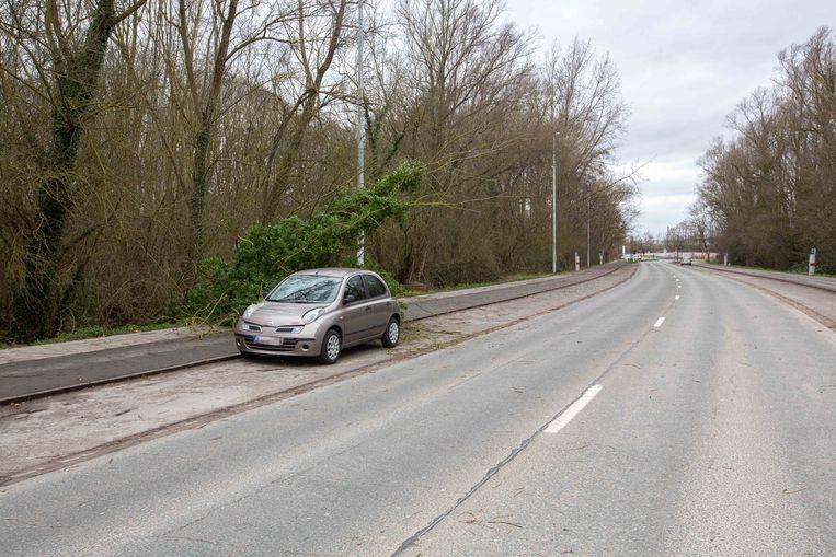 De boom kwam op de enige geparkeerde wagens langs de Affligemsestraat terecht.
