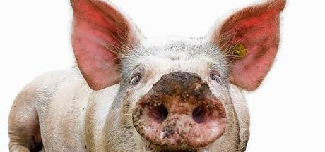 FeedValid maakt varkensvoer dat volledig uit 'restjes' bestaat
