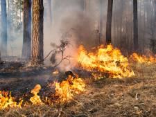 Weer bosbrand in omgeving Bladel: vuur al snel onder controle
