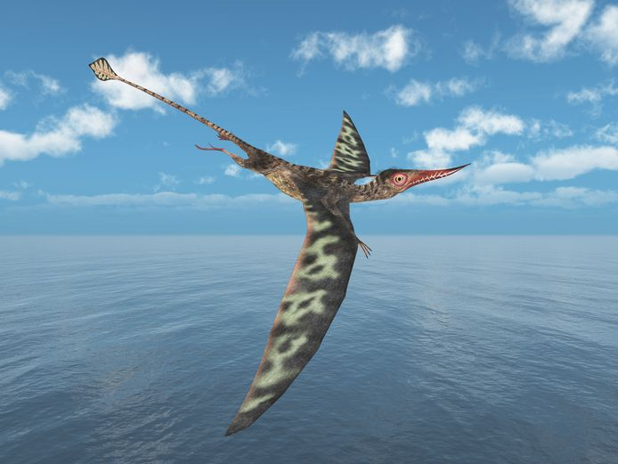 Artistieke impressie van een Rhamphorhynchus, met zijn lange staart en spitse snuit.