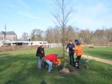 Met vier bomen blijft de jeugd in de vier kernen van Oisterwijk zich corona herinneren
