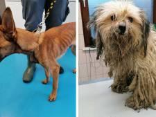 Pas soignés, un chien croulait sous ses poils et un autre avait la peau sur les os à Charleroi