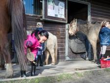 Paarden met een luizenleven in De Knaagstal