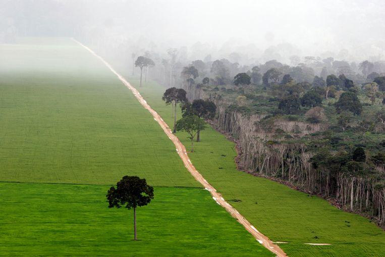 Bij Santarém is een nieuwe weg aangelegd voor de sojateelt, ten koste van het bos.  Beeld Getty Images