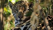 Tot 1 miljoen diersoorten met uitsterven bedreigd in komende decennia volgens nieuw rapport