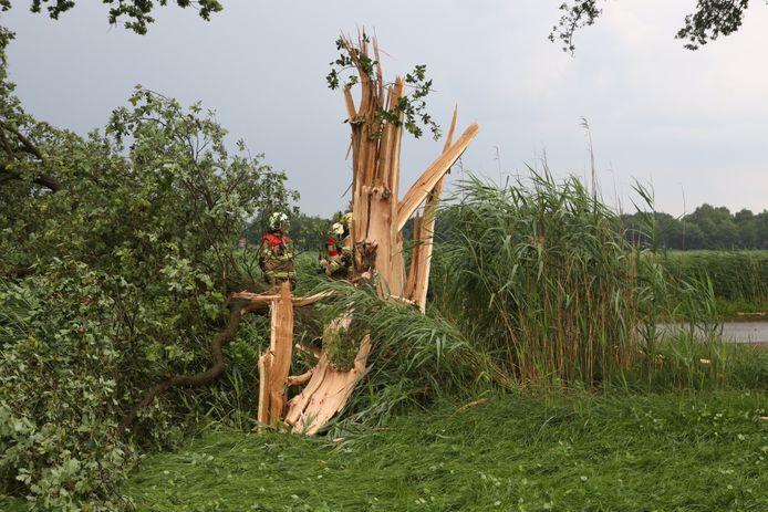 Op de Renbaan in Boxtel werd een eikenboom getroffen door bliksem.