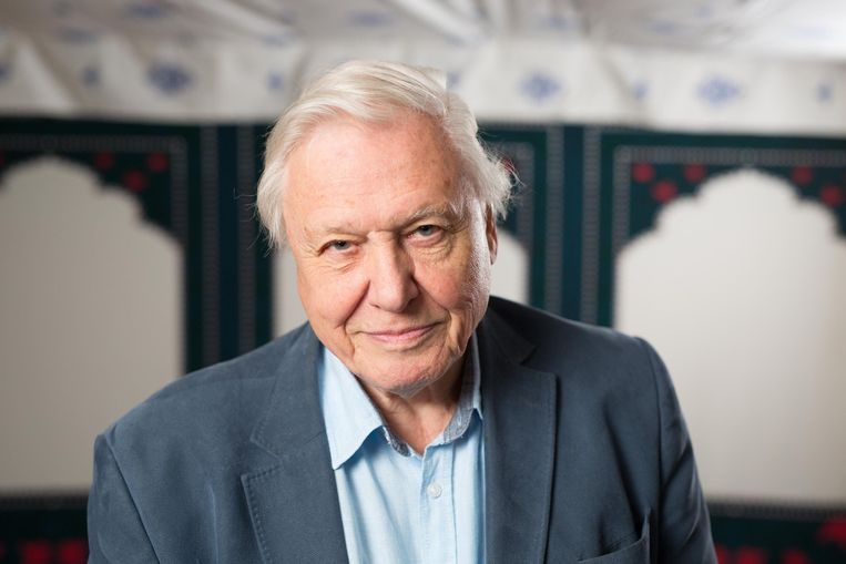 Sir David Attenborough, 92 jaar oud, maar nog niet van plan ermee te stoppen. Beeld Photo News