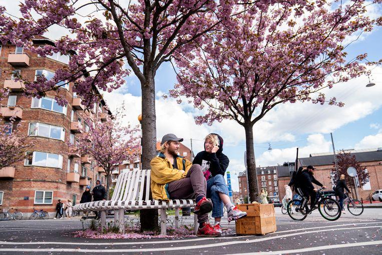 Onder de Japanse bloesem in het centrum van Kopenhagen komen twee mensen samen. Beeld EPA