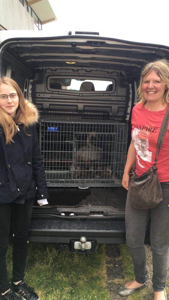 Wendy Lammens (20) en Isabelle Bertozzi (47) uit Veurne brachten de zwanen over naar het vogelopvangcentrum in Oostende.