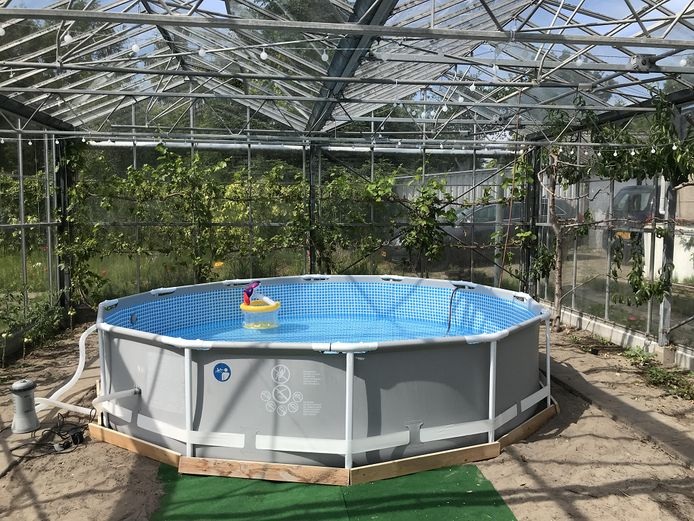 Een indoor zwembadparadijs.
