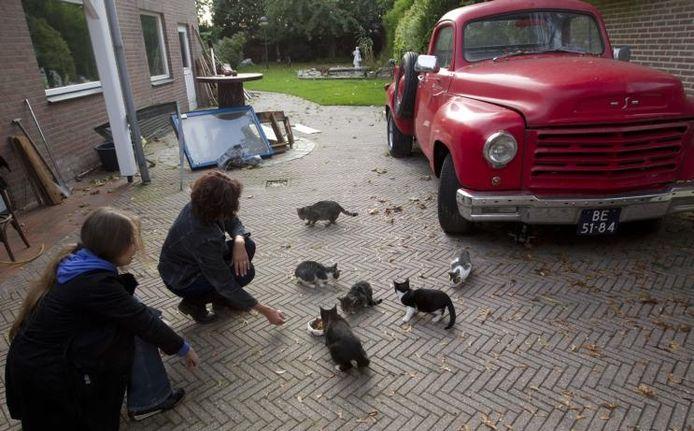Zwerfkatten in de tuin van familie Schriks aan het Bogardeind, afgelopen najaar. Op de voorgrond Olga Schouten en Liezet Smit. archieffoto Kees Martens