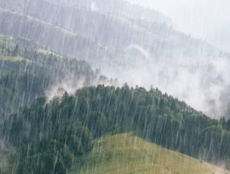 """Hoe droogte en hittegolven aanpakken? """"Gerichte herbebossing kan voor 7,5 procent meer regen in Europa zorgen"""""""