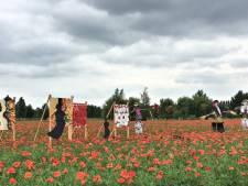 Lokale kunst bewonderen in een veld vol klaprozen