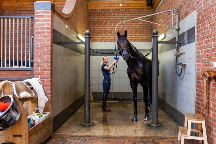 Dressuuramazone Dinja van Liere wast haar paard Hermes die ze voor de wedstrijd uit de buurt houdt van haar andere paard Haute Couture.