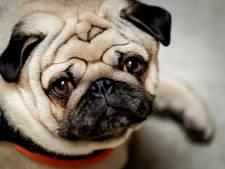 Mag je met betaald verlof als je huisdier overlijdt?