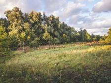 """Milieuorganisatie gaat in beroep tegen kap bos aan Flanders Expo: """"Hier vliegen 13 bedreigde vogelsoorten rond"""""""