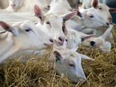 Van der Schans krijgt extra tijd om aantal geiten te verminderen; rechter laat in het midden of 150.000 euro gepaste dwangsom is